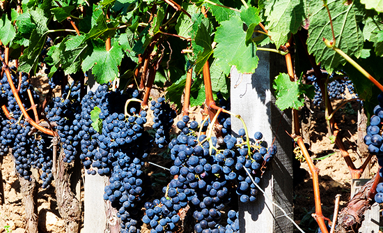 San Diego Winery Tour in Private Town Car